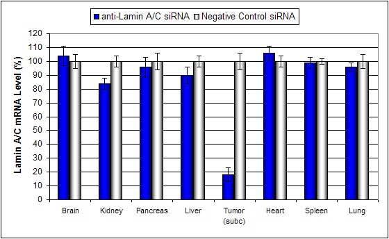 Lipid Tumor In Vivo Mouse Rat Transfection Reagent