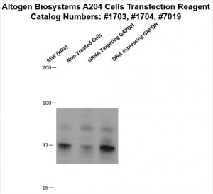 A204-cells-transfection-protocol