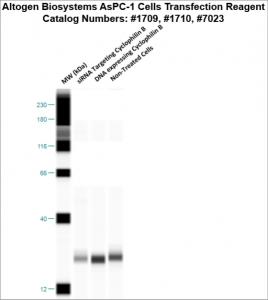 AsPC1-cells-transfection-protocol