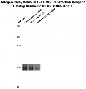 DLD1-cells-transfection-protocol