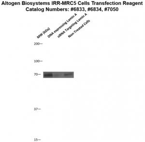 IRR-MRC5-cells-transfection-protocol