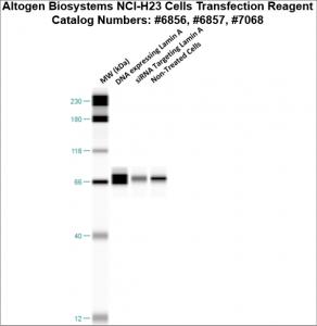 NCI-H23-cells-transfection-protocol