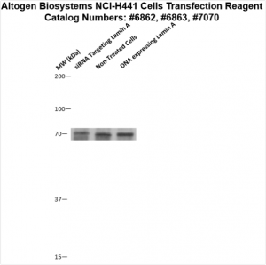 NCI-H441-cells-transfection-protocol