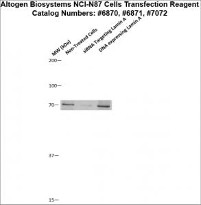 NCI-N87-cells-transfection-protocol