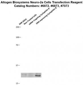 Neuro2a-cells-transfection-protocol