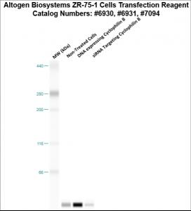 ZR751-cells-transfection-protocol