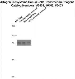 calu3-cells-transfection-protocol