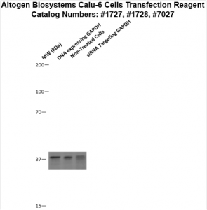 calu6-cells-transfection-protocol