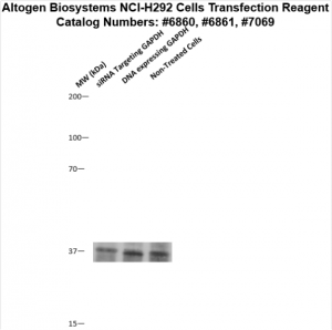 NCI-H292-cells-transfection-protocol