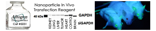Nanoparticle In Vivo Transfection Reagent