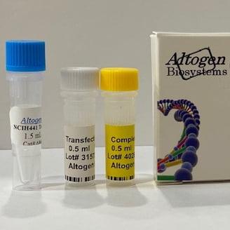NCI H441 Transfection Reagent